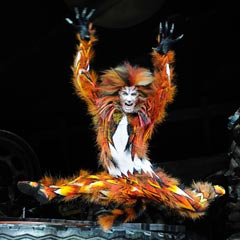The touring production of Cats. Photo: Alessandro Pinna